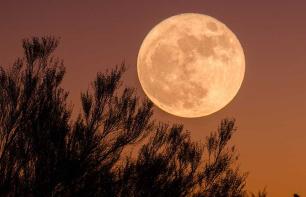 Mondkalender Garten – Gärtnern nach dem Mond