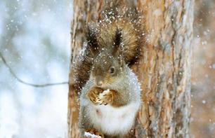 Tierfreundlicher Garten: Naturgarten für Herbst & Winter