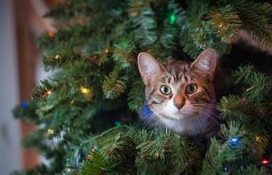 Weihnachten mit Tieren: 5 Gefahren vermeiden für Katze & Hund